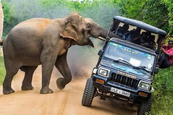 На Шри-Ланке слон напал на туристов