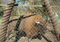 Вольерный комплекс Кавказского Биосферного Заповедника