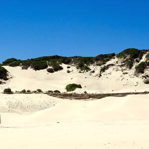 Песчаные дюны Александрия в Южной Африке