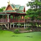 Крокодиловая ферма в Бангкоке