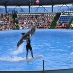 Адлерский дельфинарий «Акватория»