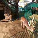 Зоопарк санатория «Октябрьский»