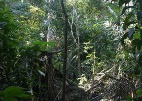 Амазонская сельва... на грани реальности