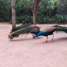 Парк птиц на Хайнане