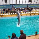 Дельфинарий в Ростове-на-Дону