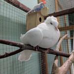 Контактный зоопарк в Тушино (проект «Джунгли»)