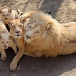 Зоопарк Тбилиси