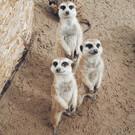 Удивительный зоопарк
