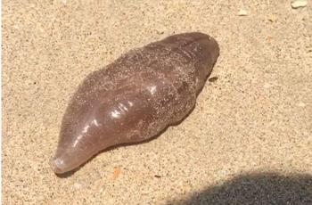 На пляже Таиланда британский турист обнаружил неизвестное существо
