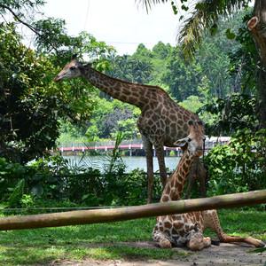 Комфортный Сингапур (часть 2 - зоологическая)