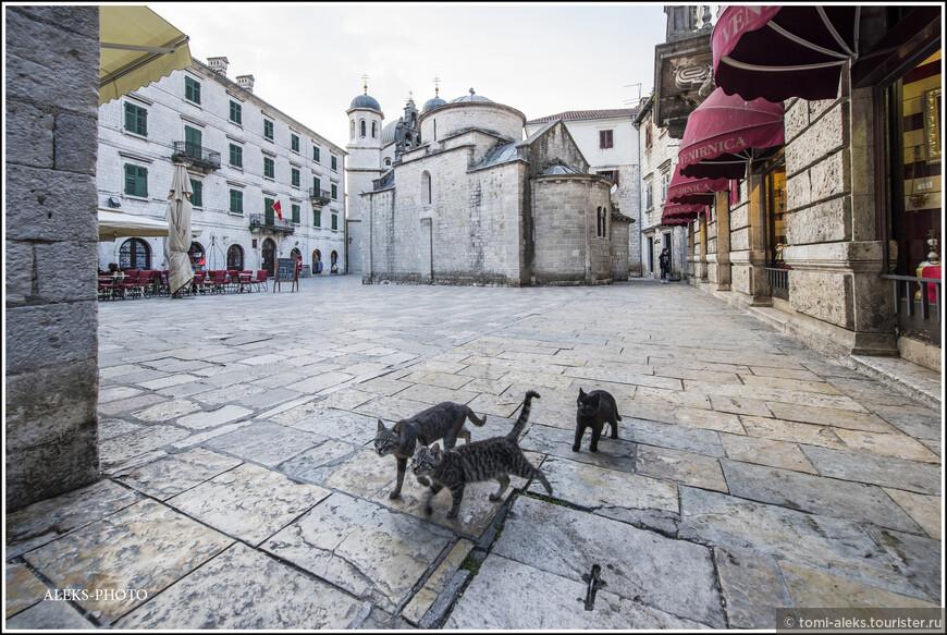 Вот это кадр — то что надо. Это четвероногие обитатели Котора. Кошек в Черногории, конечно, не так много, как в Стамбуле, например. Или — в любом городке Марокко. Но чувствуют они себя тоже вольготно...