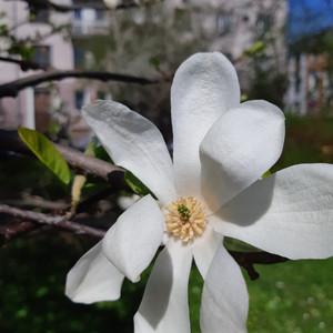 Апрель в Калининграде