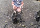 Самые доброжелательные и симпатичные обезьянки