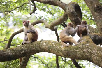 В Китае обезьяна отомстила туристу, столкнувшему ее в пруд