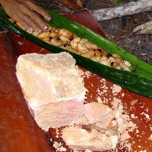 Коровайский деликатес — личинки Sago Worm и саговая мука
