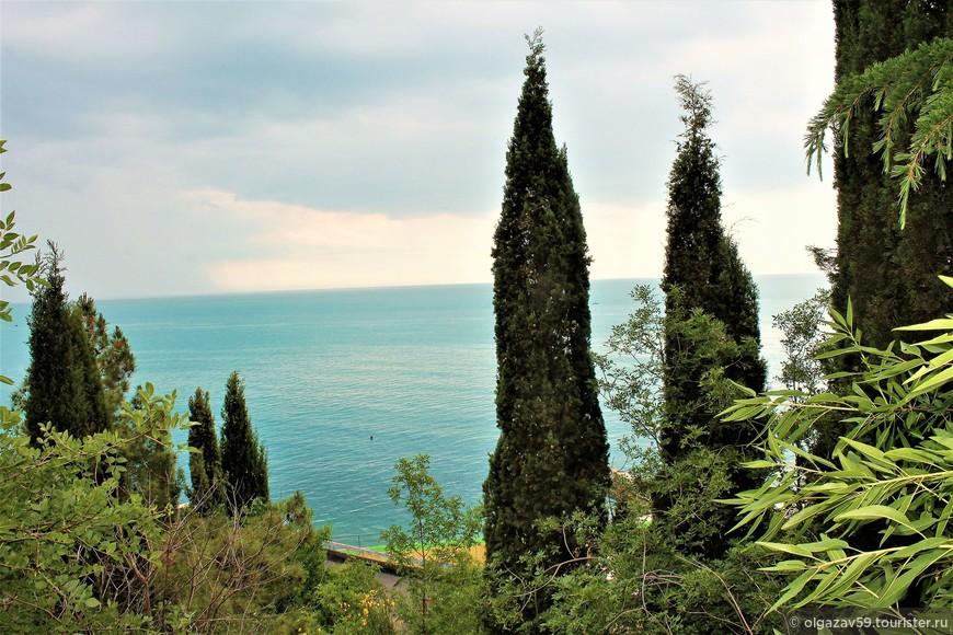 Кипарисы у моря картинки