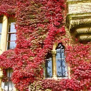 Оксфордский университет в багровом убранстве.