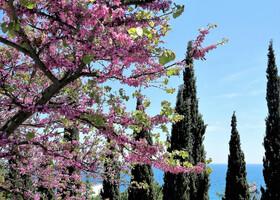 Весна в Крыму. Утёс и окрестности