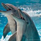 Дельфинарий Коктебеля