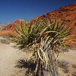 Краски Сев.Америки. Пустыня Мохаве цвета юкки