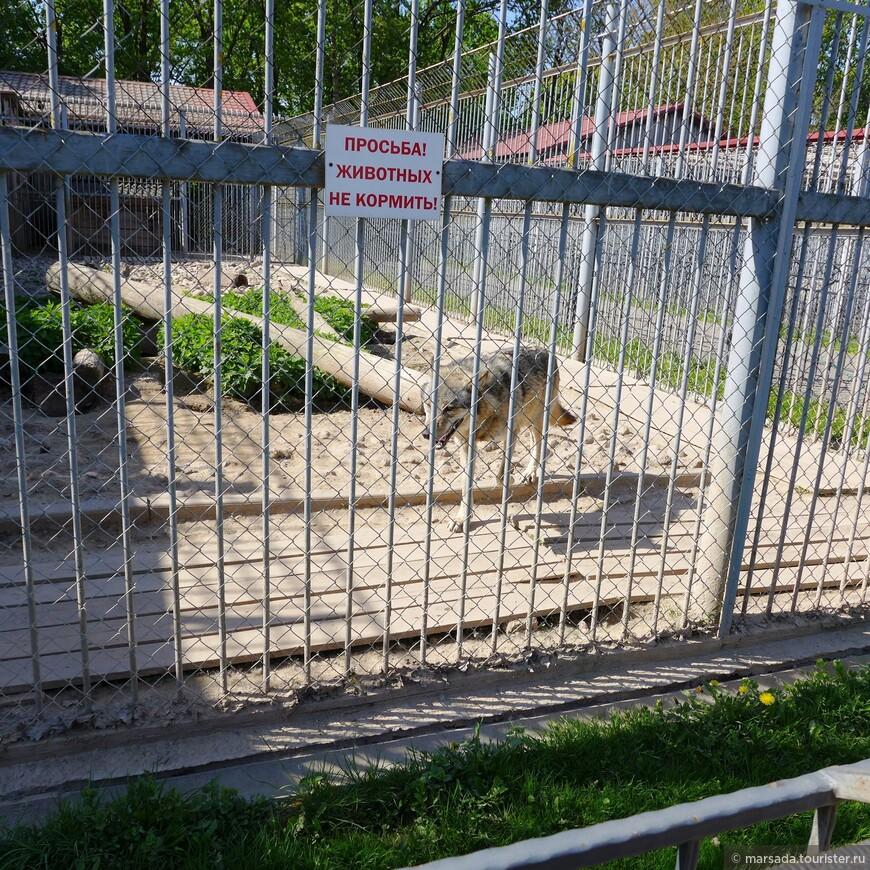 В первой части зоопарка - звери традиционно в клетках, но нам такой формат не нравится