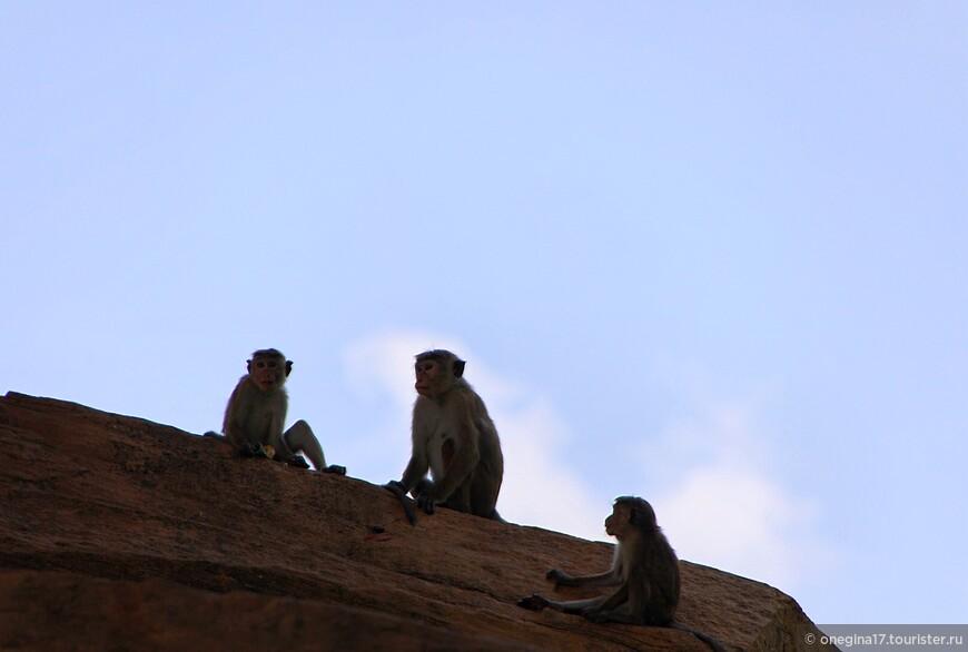 Шри-Ланка — Благословенная Земля. Как все начиналось…, отзыв от ... 5eee4b6faf8