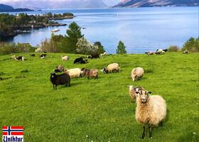 Очарование норвежской глубинки