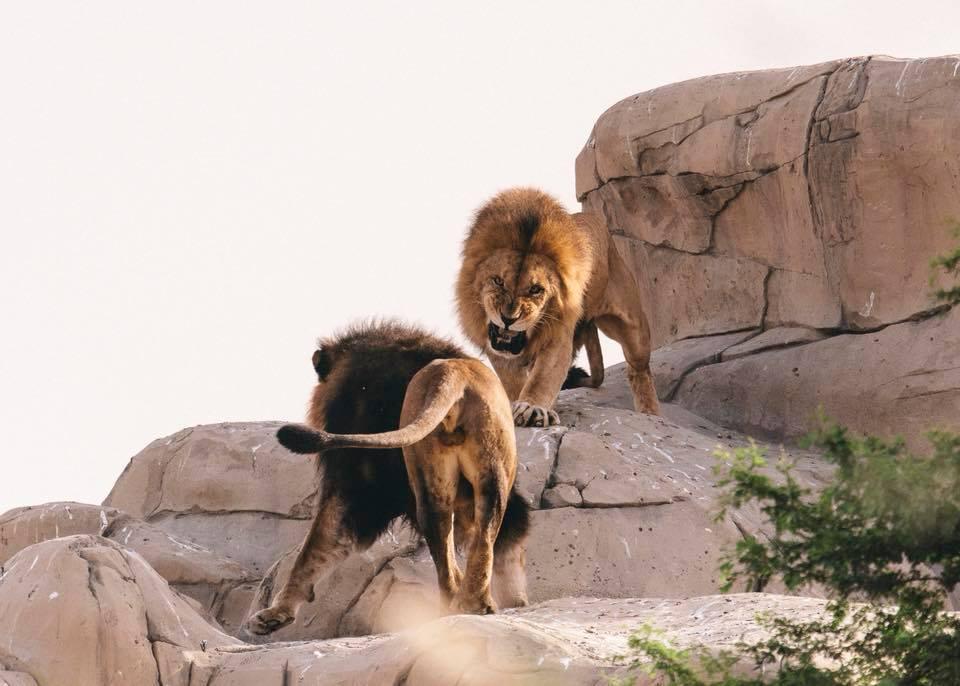 Дубай зоопарк новый купить недвижимость в лондоне