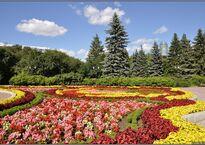 Цветочные поляны