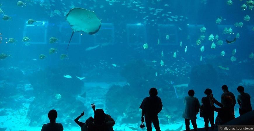 Океанариум в Сингапуре S.E.A. Aquarium