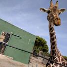 Safari Zoo