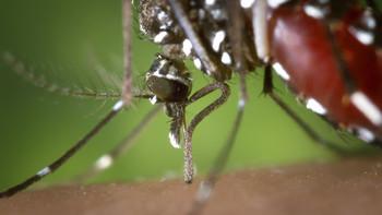 МИД РФ предупреждает о лихорадке Денге во Вьетнаме и Сингапуре
