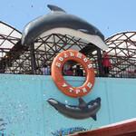 Дельфинарий на Большом Утрише
