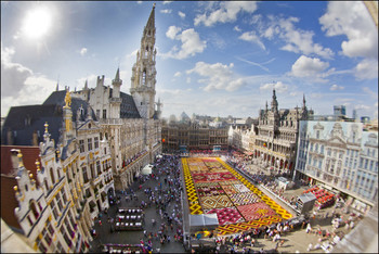 В Брюсселе появится цветочный ковер
