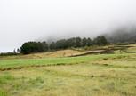 Лес исчезает в тумане, прохладно однако