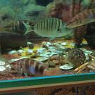 Морской аквариум «Батискаф»
