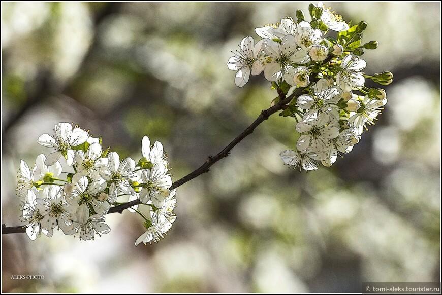 В городах, расположенных среди гор есть какое-то особое очарование, и весна в них наступает по особому красиво. Цветы сопровождали нас в течение всего путешествия по трем бывшим республикам бывшей Югославии...