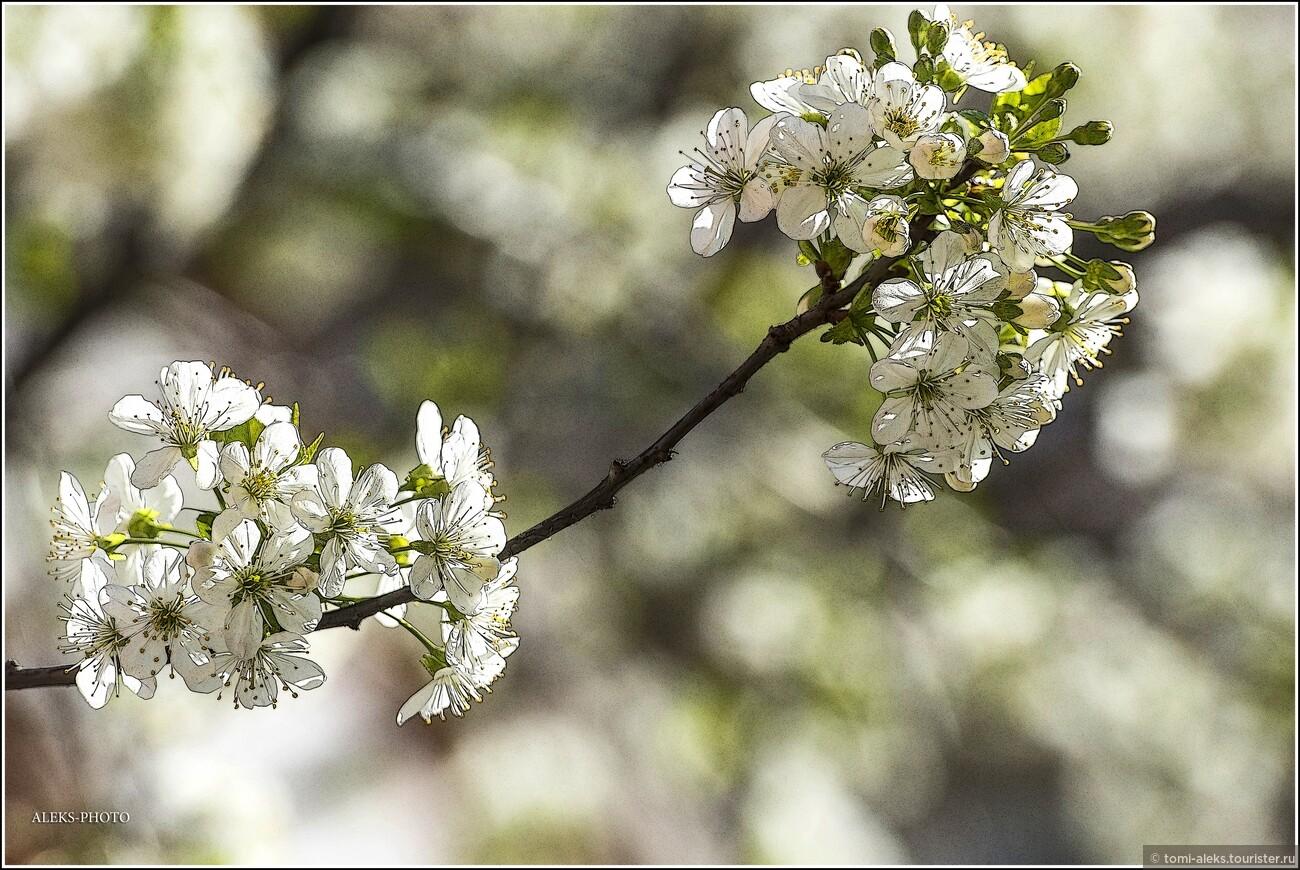 В городах, расположенных среди гор есть какое-то особое очарование, и весна в них наступает по особому красиво. Цветы сопровождали нас в течение всего путешествия по трем бывшим республикам бывшей Югославии... , Очарование Сараево (прогулка первая)