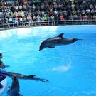 Дельфинарий Новосибирска