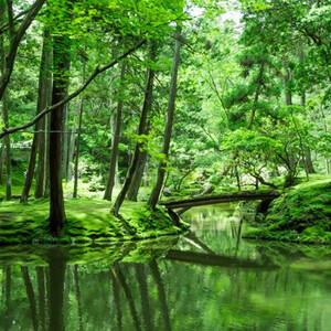 Сад мхов в Киото(西芳寺)