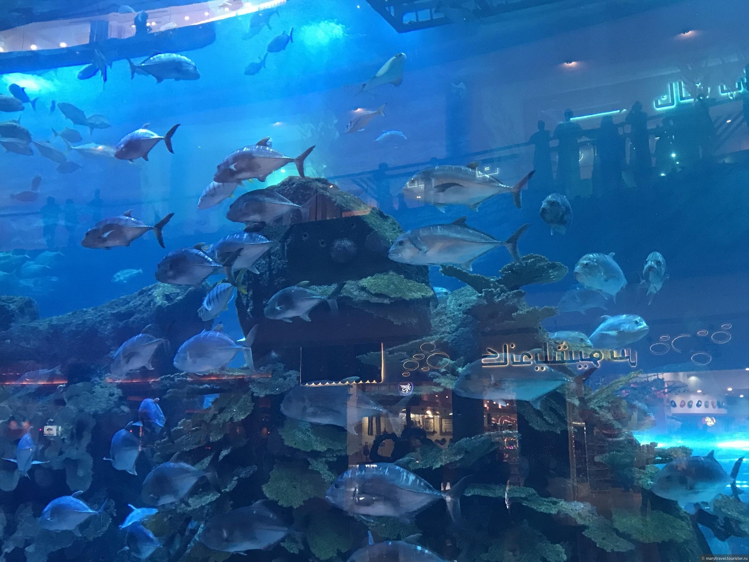 Купить билет в аквариум дубай снять квартиру в шардже на месяц