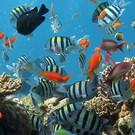 Лазаревский океанариум «Тропическая Амазонка»