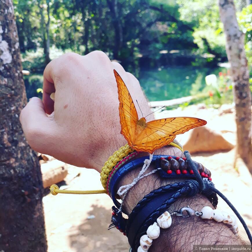 Бабочка у истока водопада Куанг Си