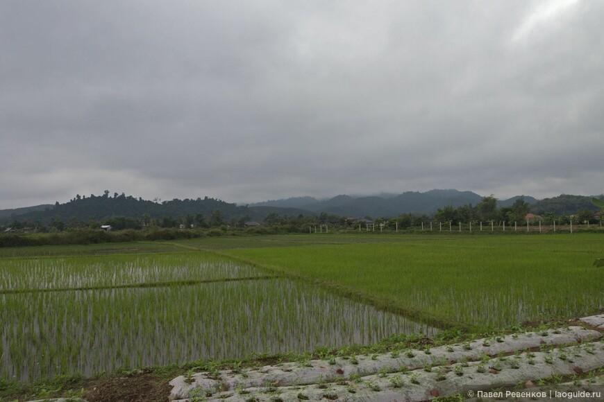 Рисовые поля недалеко от города Луанг Намтха