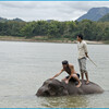 День 1. Катание и купание на слонах.