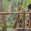 День 2. Луангпрабанг. Центр реабилитации малайских медведей около водопадад Куанг Си.