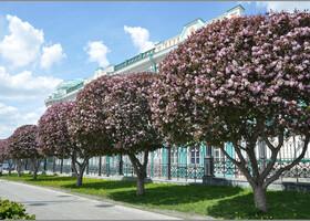 Ботаник из меня никакой, большую часть жизни жила там, где только иван-чай цветет. Долго сомневалась, что же это так красиво цветет вдоль Дома Севастьянова. Думала, что яблони цветут только белым цветом. Была неправа!