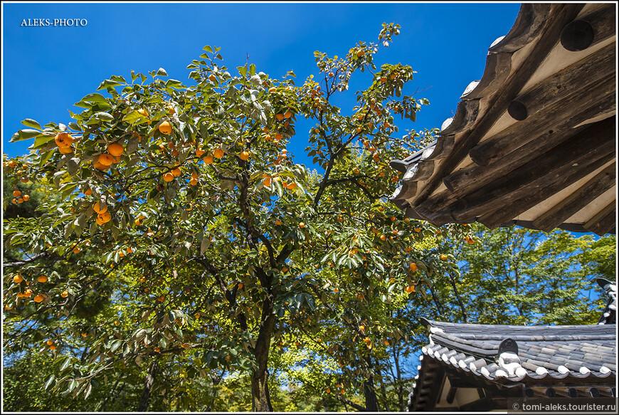 Мы были в Южной Корее в октябре (всем советую это время года) и повсюду видели деревья с плодами спелой хурмы. Красота необычайная...