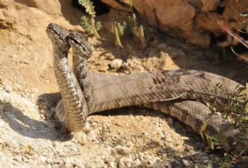 В Тбилиси предупреждают о змеях