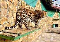 Парк львов «Тайган»